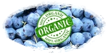 organic frozen blueberry in bulk packaging